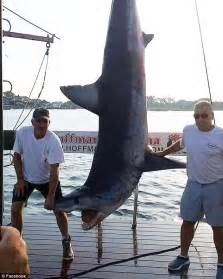 the record newspaper new jersey 926 pound mako shark caught off the coast of new jersey