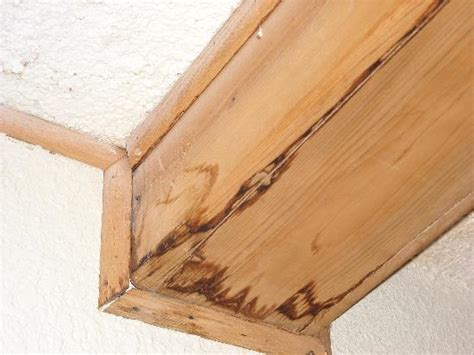 Wood Trim Around Ceiling by Wood Trim Along Ceiling Picture Of Quality Inn Omaha