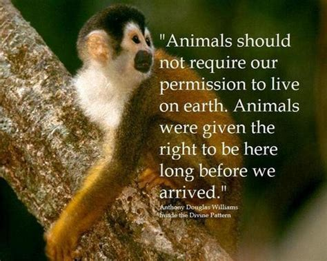 Animal Quotes Animal Cruelty Quotes Image Quotes At Relatably