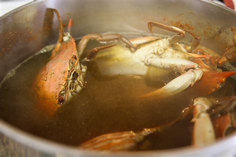 how to cook and eat blue crabs latest porn movies