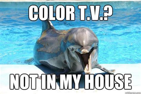 Dolphin Meme - creepy dolphin meme memes