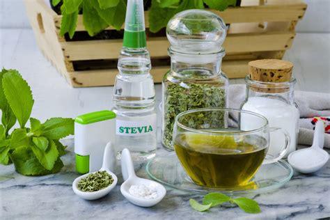 stevia coltivazione in vaso stevia rebaudiana propriet 224 e coltivazione della pianta