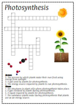 activity 3 carbohydrates puzzle answers photosynthesis crossword puzzle review for interactive