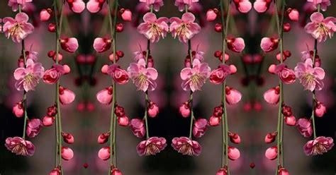 tostapane spongebob foto dei fiori piu belli mondo 28 images classifica 10