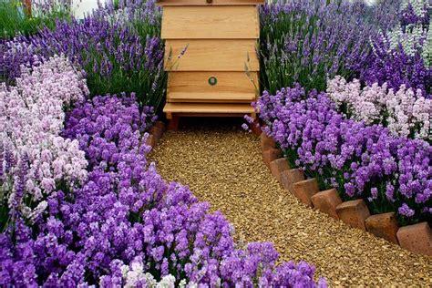 honey bee garden honey bees buzz
