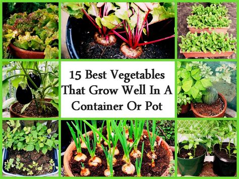 15 Best Vegetables That Grow Well In A Container Or Pot Gardening Vegetables