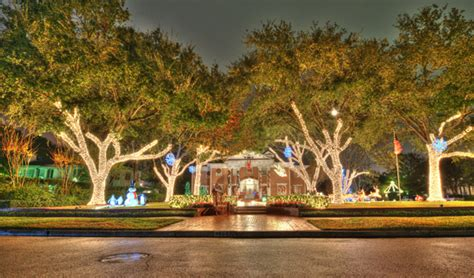 live christmas trees houston river oaks lights in houston our ulr properties