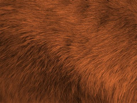 brown fur pattern brown fur background free stock photo public domain pictures
