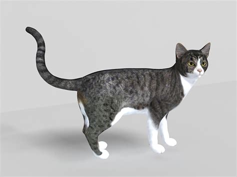 3d Cat grey tabby cat 3d model 3ds max files free modeling 29057 on cadnav