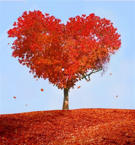 images of love tree all we need is love pam parish