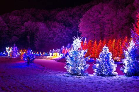 Decorate Your Christmas Tree With Christmas Outdoor Tree How To Decorate A Tree With Multicolor Lights