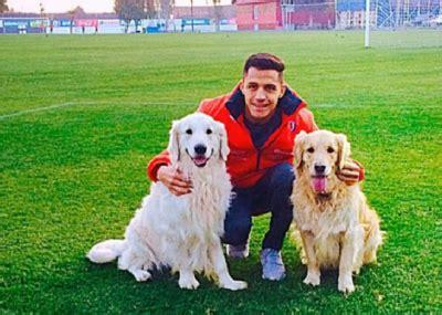alexis sanchez y sus perros la conmovedora relaci 243 n que tiene alexis s 225 nchez con sus