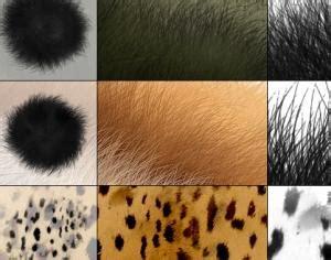 fur pattern brush fur brushes texture photoshop brushes brushlovers com