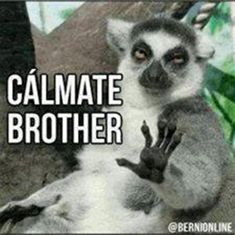 imagenes con memes que digan groserias imagenes para comentar estados facebook im 225 genes