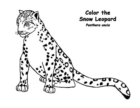 the amazing in addition to gorgeous snow leopard coloring