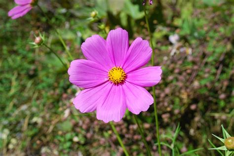 fiori autunnali da giardino fiori da giardino perenni giardinaggio tipologie di