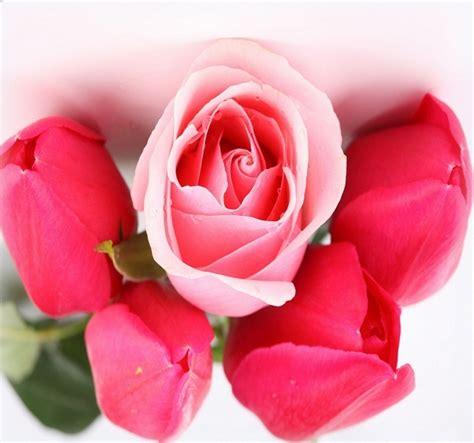 Imagenes De Rosas Descargar Gratis | imagenes de flores para fondo de pantalla poemas para