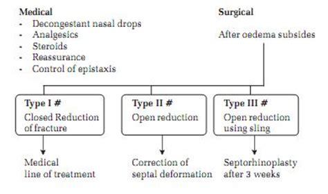 broken nose diagram distal nasal bone pictures to pin on pinsdaddy