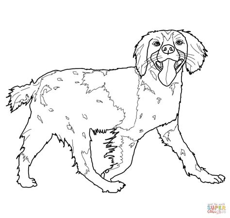 coloring pages of cavalier king charles spaniels brittany spaniel coloring page free printable coloring pages