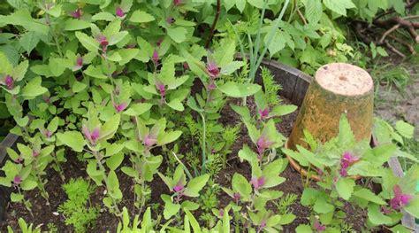 Ameisen Im Blumentopf In Der Wohnung by Ameisen Im Blumentopf Fabulous Ameisen Im Blumentopf With