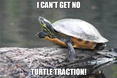 turtle meme 20 turtle memes that ll make your day better