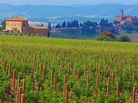 best wine in tuscany wine tasting at tuscany s best wineries