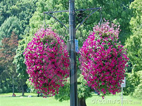 design hanging flower baskets gardening landscaping great hanging basket flowers