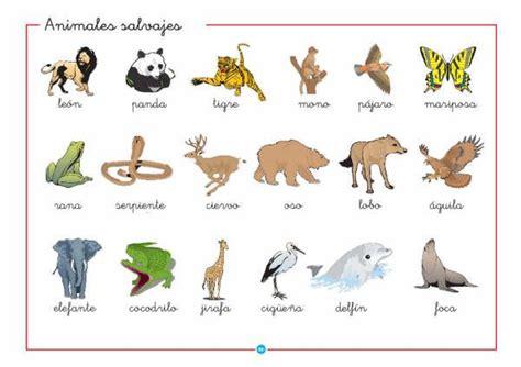 imagenes de zoologico en ingles 10 animales salvajes en ingl 233 s y espa 241 ol imagui