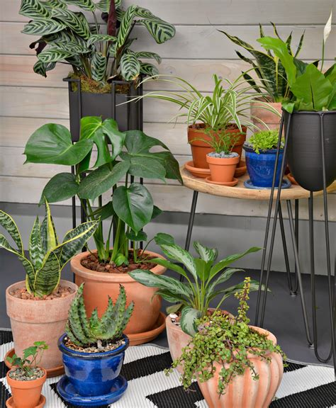 discover  wild  indoor plants  lifestyle home