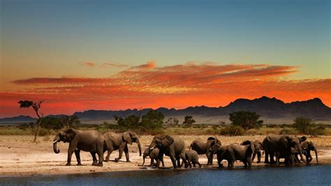 wallpaper for walls south africa elephants family in south africa 4k wallpapers