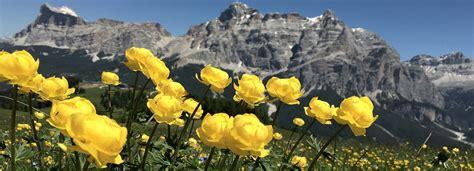 Flower Mountain mountain flowers mountain hiking holidays