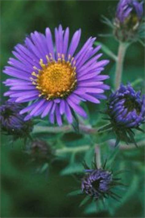 november birthstone color and flower images