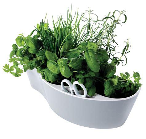 le erbe aromatiche in cucina le erbe aromatiche in cucina bl 232 surgelati
