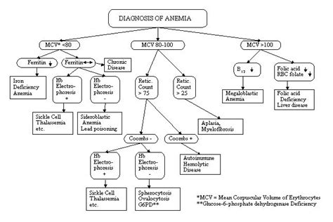 diagnosing anemia flowchart flow chart for anemia yahoo image search results