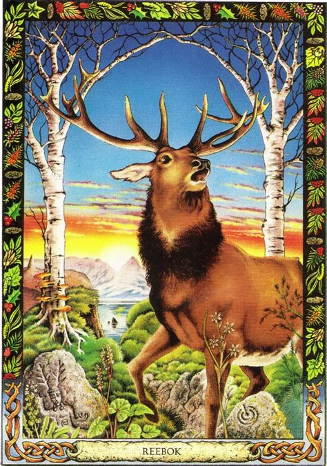 the druid animal oracle stag the druid animal oracle by stephanie and phillip carr meaning pride independence and