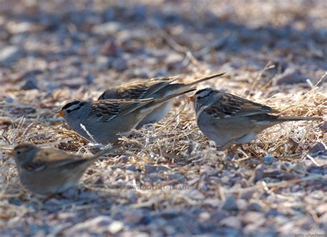 birds eating seed off the ground special memories