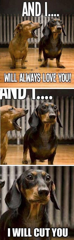 Funny Dachshund Memes - the 25 best ideas about dachshund meme on pinterest