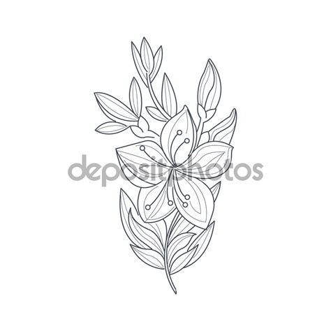 jasmine flower tattoo design flower drawing at getdrawings free