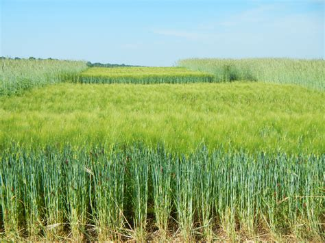 best management practices cropping and harvesting