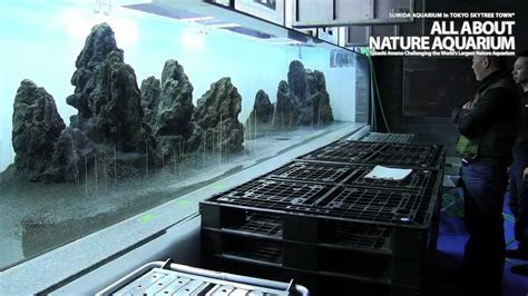 Aquascaping Tanks Takashi Amano 215 Sumida Aquarium Vol 2 Youtube
