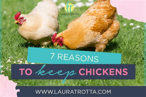 7 benefits of keeping backyard chickens trotta