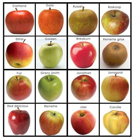 Tag Doormats Varietes De Pommes Fruits