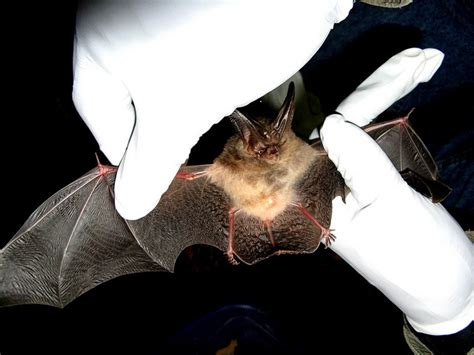 How Do You Get Rid Of Bats In Your Backyard by The Guide To Getting Rid Of Common Attic Household Pests