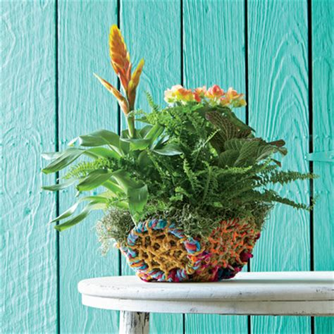 indoor container garden create with whimsy indoor container gardening southern