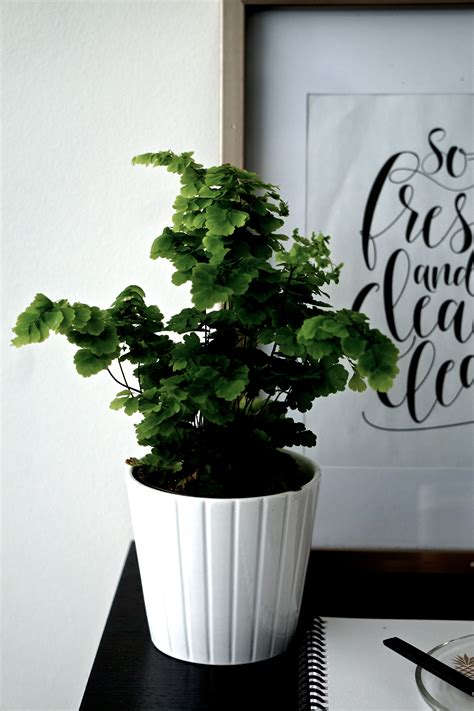 indoor plants that don t need light indoor plants that don t need a lot of light 28 images