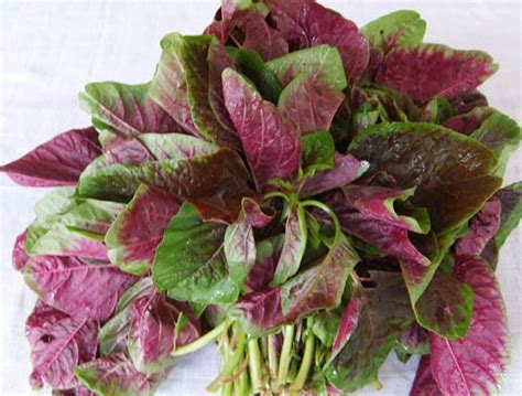 amaranth seed amaranthus tricolor zhong wei