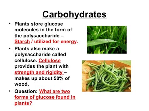 2 carbohydrates found in plants biochemistry