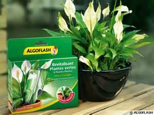 une v 233 ritable cure de beaut 233 pour toutes les plantes d