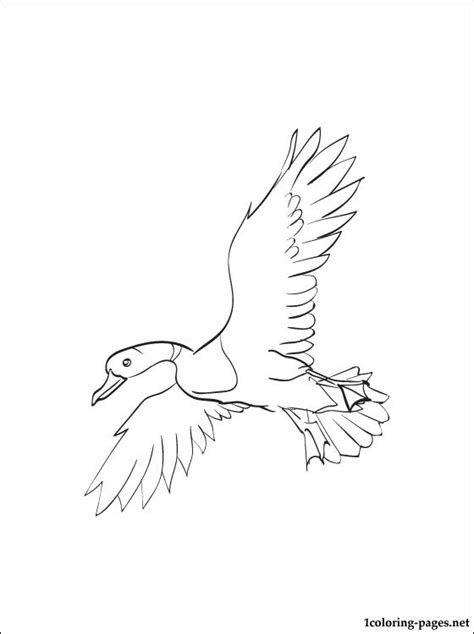 coloring page mallard coloring pages