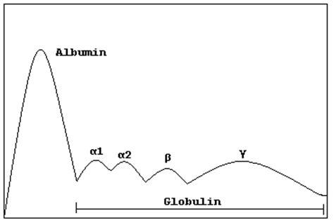 m protein in blood test serum globulin electrophoresis causes symptoms